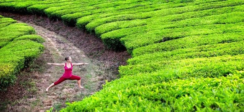 Abnehmen und grüner Tee