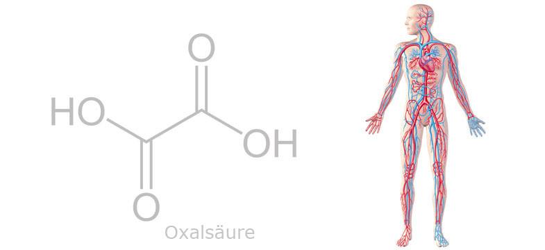 Oxalsäure (Oxalat) im Tee