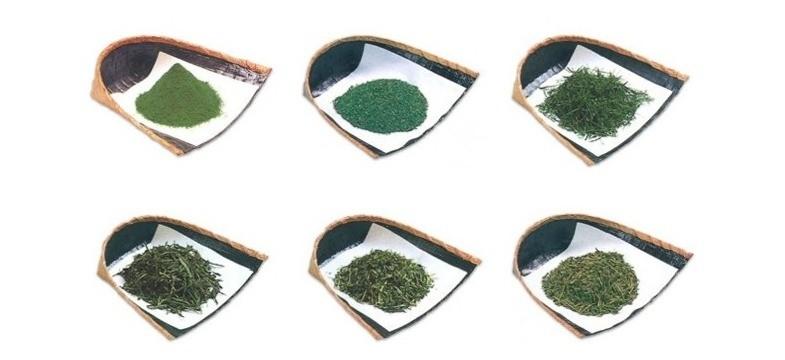 Koffein und L-Theanin im grünen Tee