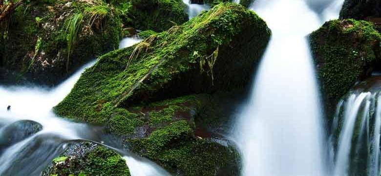 Grüner Tee gegen chronische Blasenentzündung