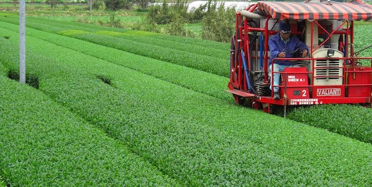 Erntemaschinen im Flachland bescheren Teefarmer in Kagoshima eine hohe Produktivität