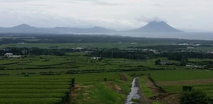 Teefelder mit Blick von Makurazaki auf das Wahrzeichen Kagoshimas, den aktiven Vulkan Mt. Sakurajima