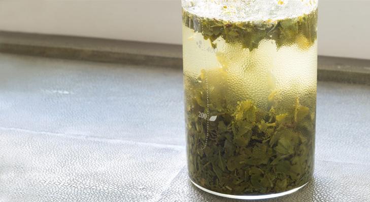 Teeflasche zur Zubereitung von Mizudashi