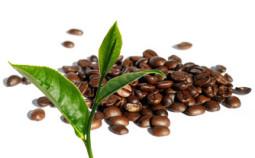 teeblatt-kaffeebohnen