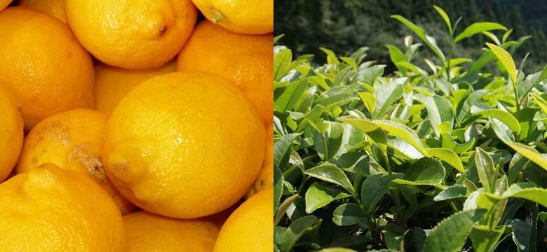 Grüner Tee Wirkung mit Vitamin C / Zitrone