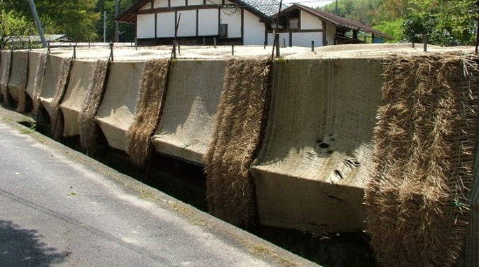 Honzu-Technik bei der Gyokuro-Beschattung