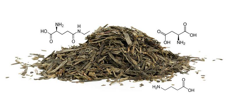Aminosäuren und L-Theanin im grünen und weißen Tee