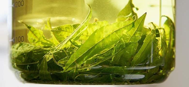 Tee bei Divertikulitis, Divertikulose und Divertikel